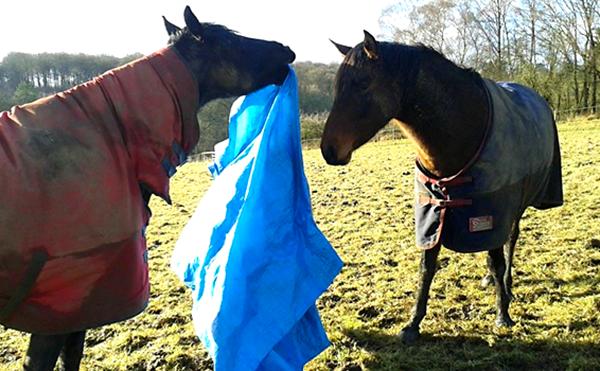 equine training field