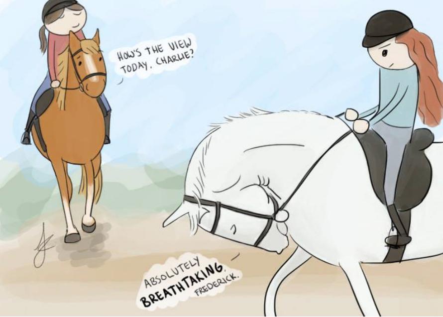 equine positive reinforcement