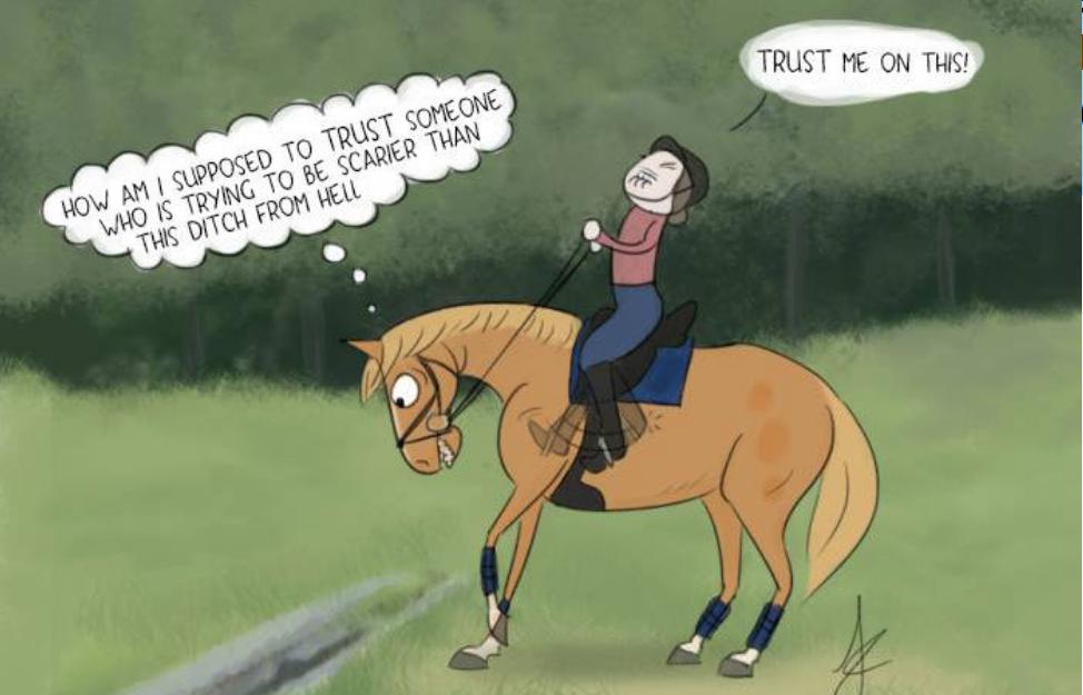 shaping equine behaviour