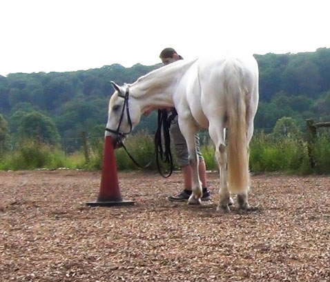 equine targetting exercise